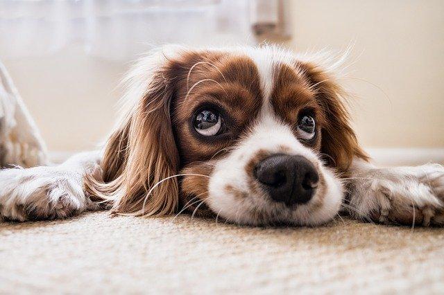 ריח שתן של כלבים